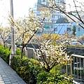 梅川52.jpg