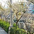 梅川51.jpg