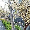 梅川53.jpg