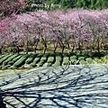 武陵53.jpg