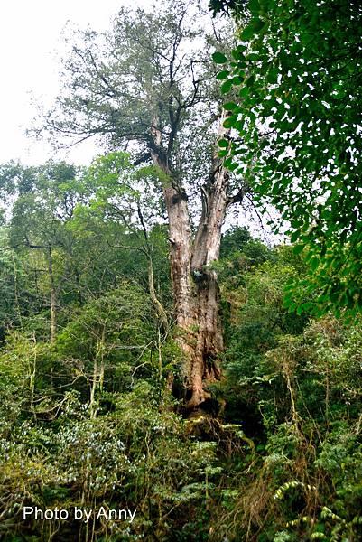 巨木群19.jpg