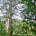 巨木群21.jpg