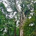 巨木群24.jpg