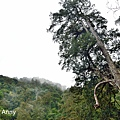 巨木群29.jpg