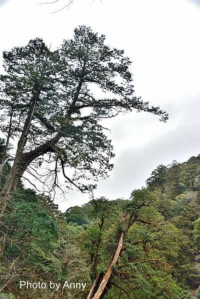 巨木群30.jpg