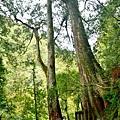 巨木群32.jpg