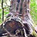 巨木群34.jpg