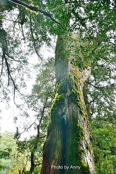 巨木群36.jpg