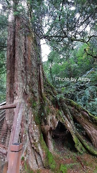 巨木群46.jpg