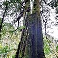 巨木群58.jpg