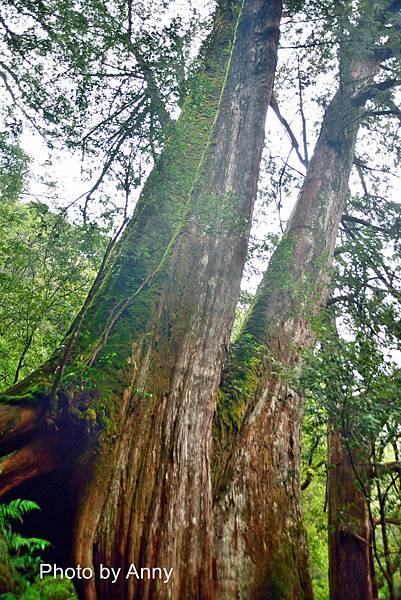 巨木群62.jpg