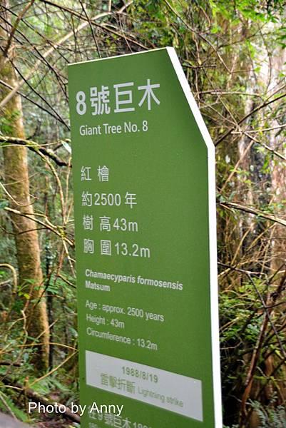 巨木群65.jpg