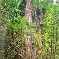 巨木群66.jpg