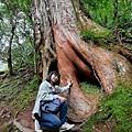 巨木群70.jpg