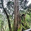 巨木群72.jpg
