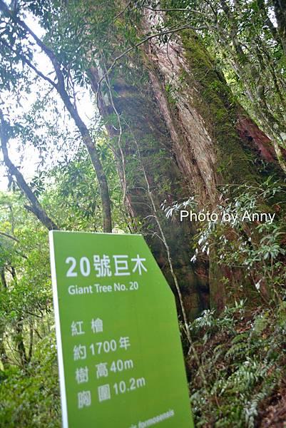 巨木群79.jpg