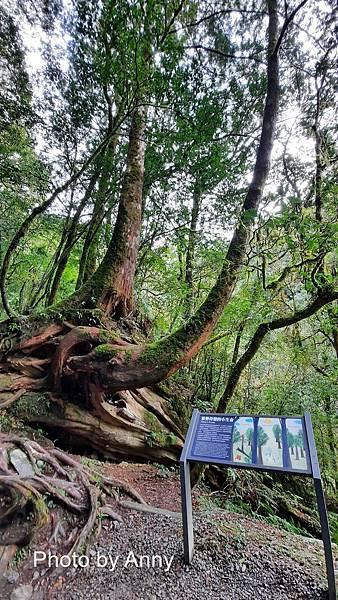 巨木群83.jpg