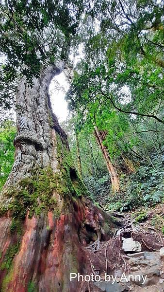 巨木群92.jpg