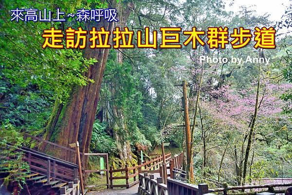 巨木群a1.jpg