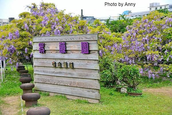 紫藤2.jpg