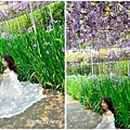 紫藤28.jpg
