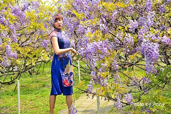 紫藤52.jpg