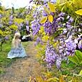 紫藤60.jpg
