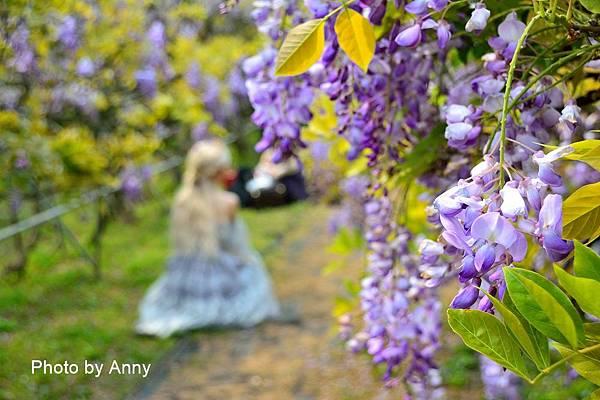 紫藤61.jpg