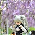 紫藤69.jpg
