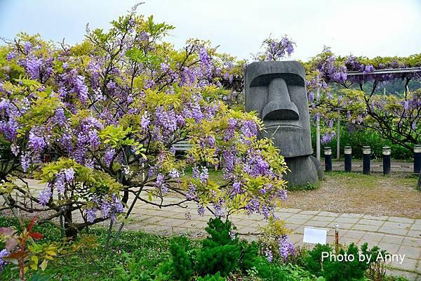 紫藤67.jpg