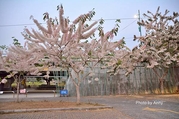 竹崎公園5.jpg