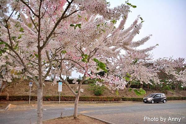 竹崎公園4.jpg