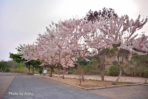 竹崎公園6.jpg