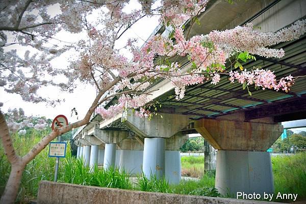 竹崎公園2.jpg
