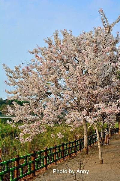 竹崎公園14.jpg