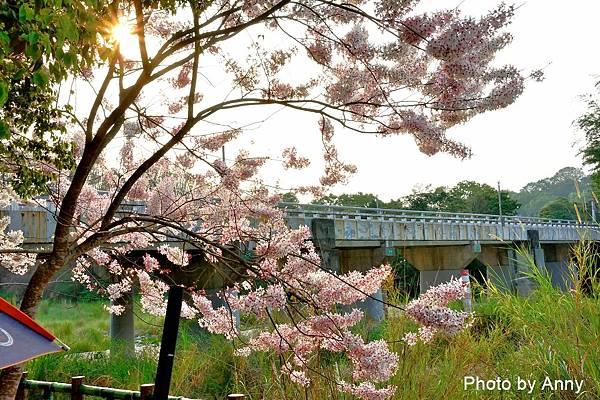 竹崎公園13.jpg