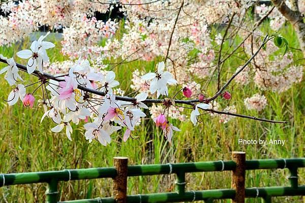 竹崎公園19.jpg