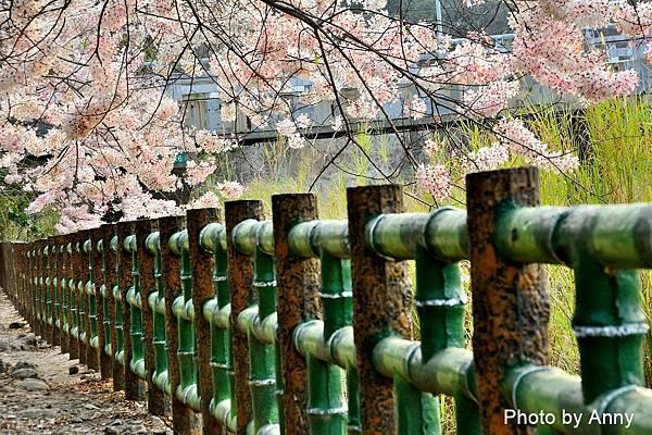 竹崎公園25.jpg