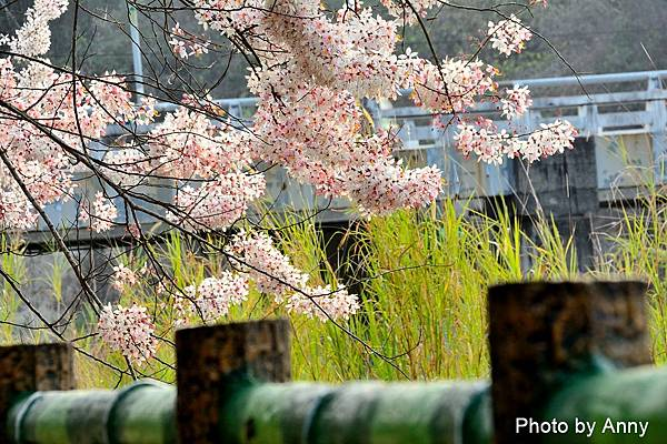 竹崎公園24.jpg