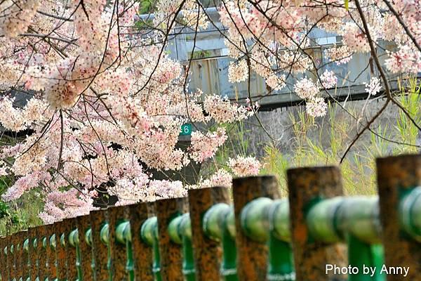 竹崎公園23.jpg
