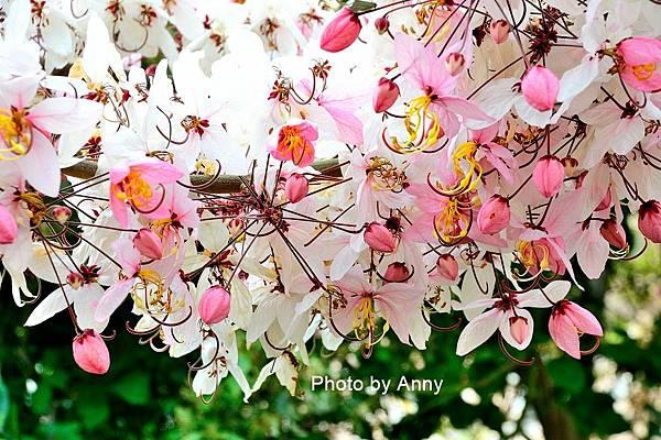 竹崎公園40.jpg