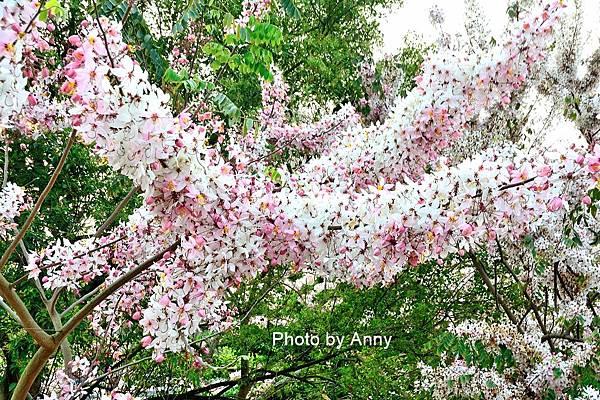 竹崎公園42.jpg