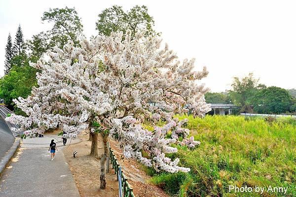 竹崎公園53.jpg