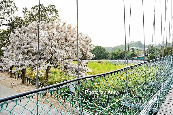 竹崎公園51.jpg