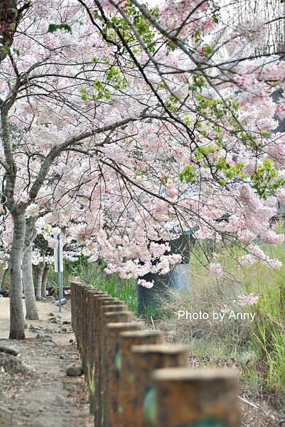竹崎公園66.jpg
