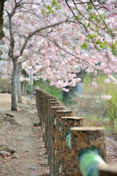 竹崎公園65.jpg