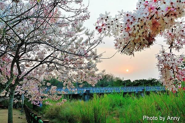 竹崎公園74.jpg