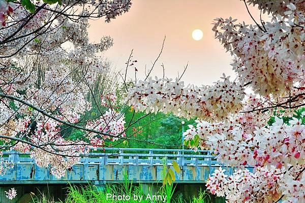 竹崎公園72.jpg