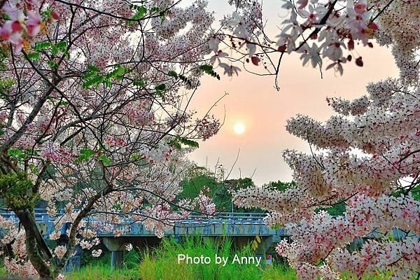 竹崎公園71.jpg