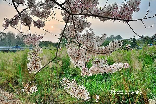 竹崎公園68.jpg